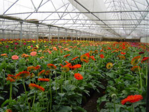Horticulture Floriculture Commercial Greenhouse