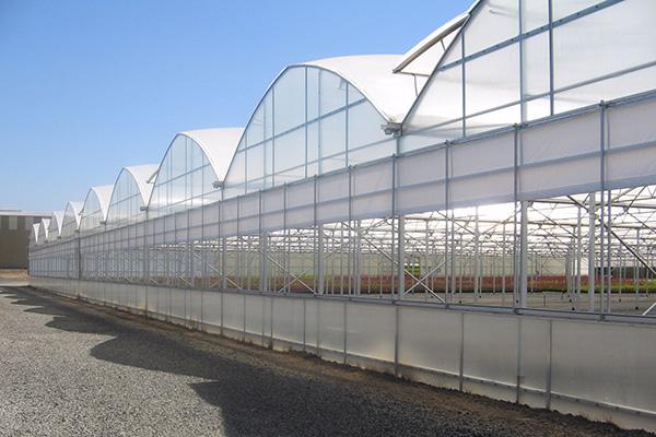 Commerical Custom Quonset Greenhouse