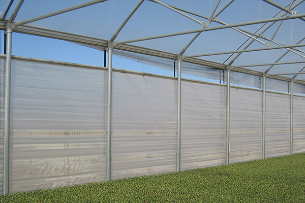 Greenhouse Sidewalls Transplant Commercial Production
