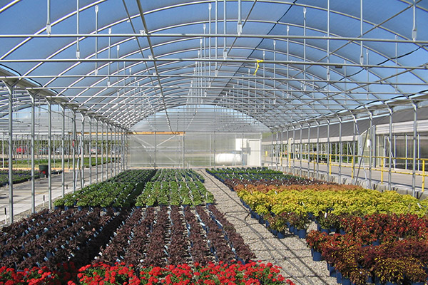 Commercial Quonset Greenhouse Floriculture Horticulture