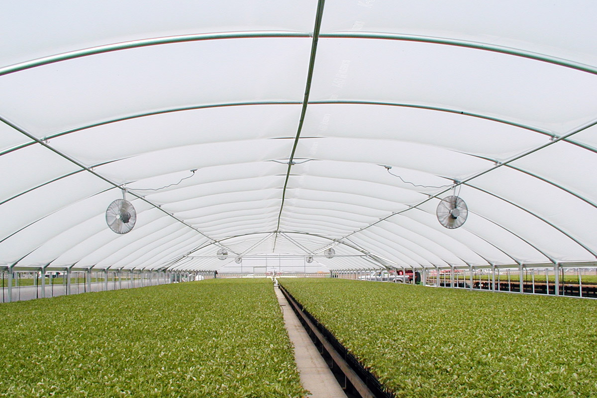 Commercial Quonset Greenhouse Transplant
