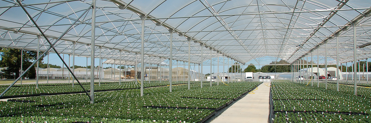 Commercial Crop Quonset Greenhouse