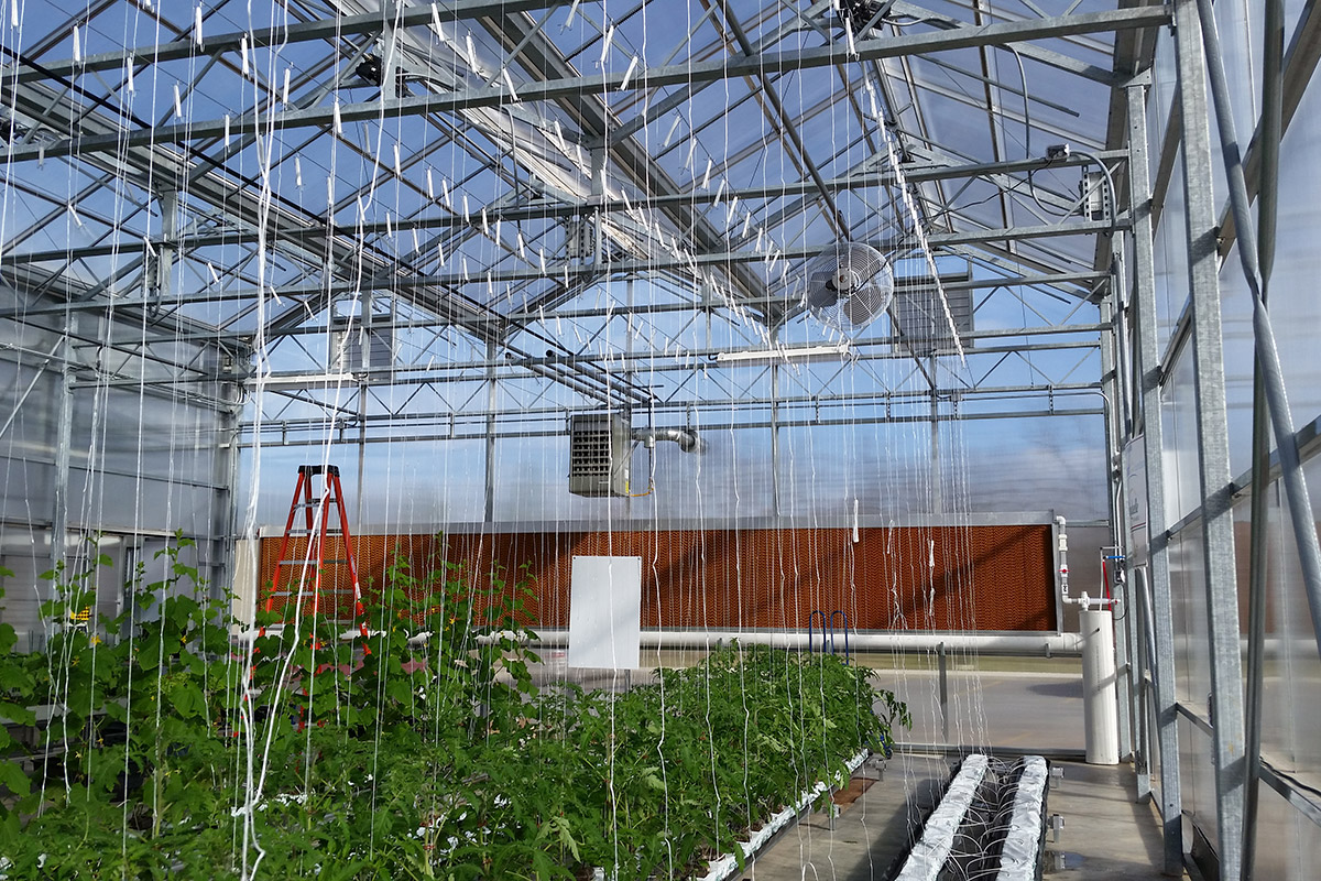 Venlo Style Open Roof Greenhouse Growing Systems