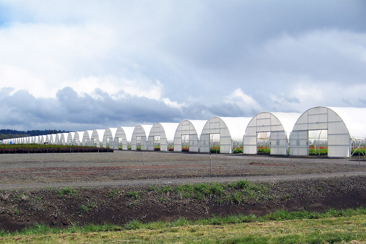 Commercial Cold Frame Hoop House Nursery Greenhouse