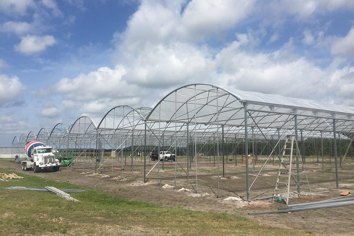 Self Build Greenhouse Construction