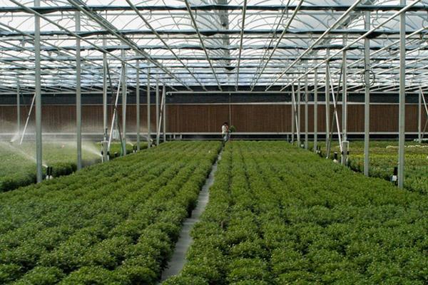 Venlo Style Greenhouse High Sidewalls