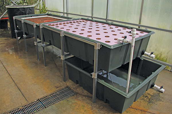 Educational Growing Systems Aquaponic Aqueduct
