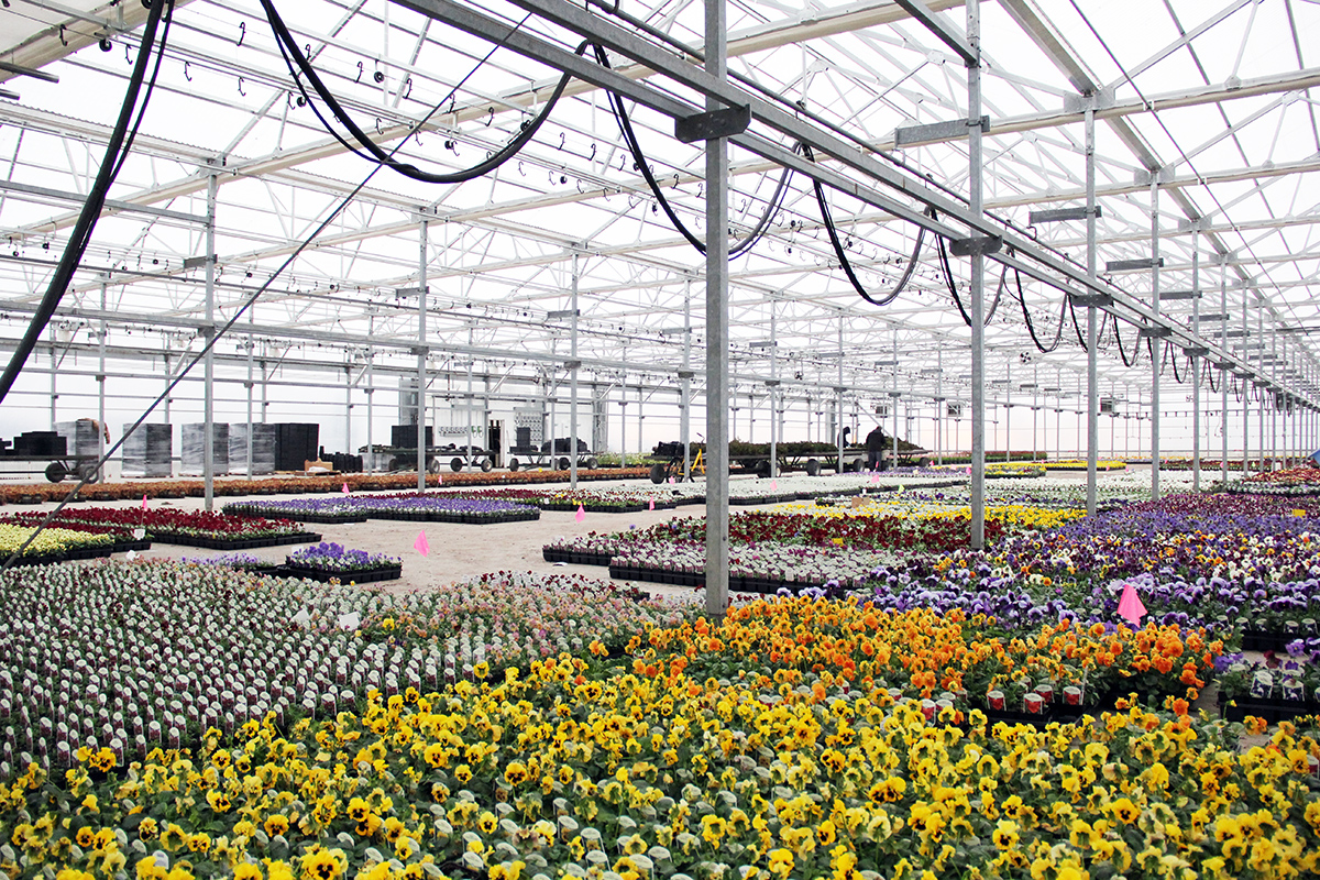 Commercial Greenhouse A-Frame Floriculture Horticulture