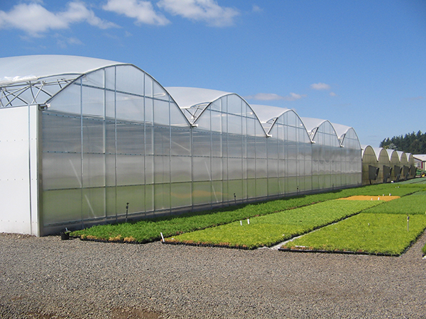 Commercial Greenhouse Quonset Crops