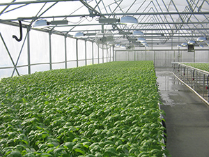 Commercial Growing Systems Hydroponic NFT