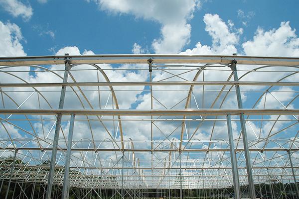 Turn key greenhouse construction Self build