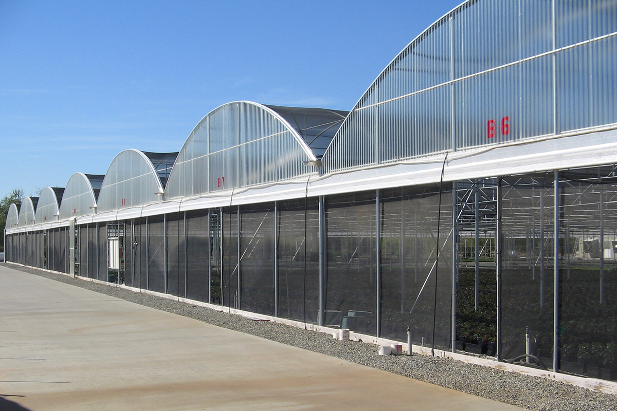 Greenhouse Hemp Gutter Connected Controlled Environment