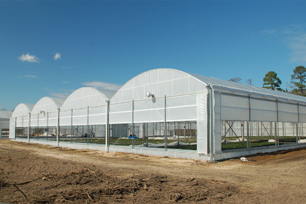 Commercial Quonset Greenhouse Vegetable Growers