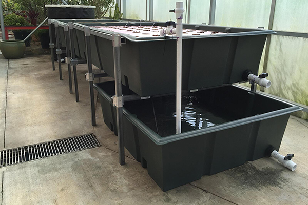 Aquaponic Growing Systems Fish
