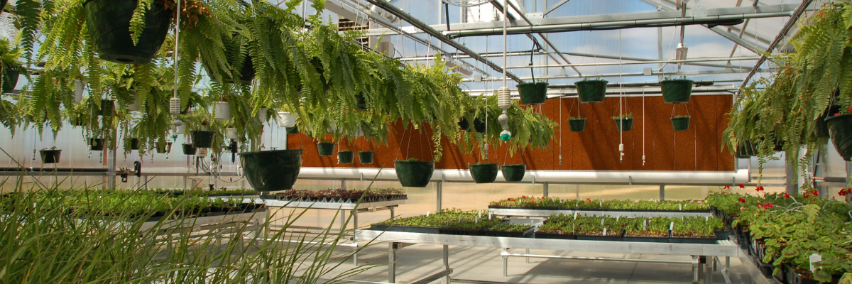 Custom Educational Greenhouse Benches