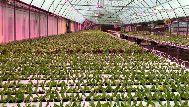 Commercial Hydroponic Growing System Vegetables Herbs Fruit