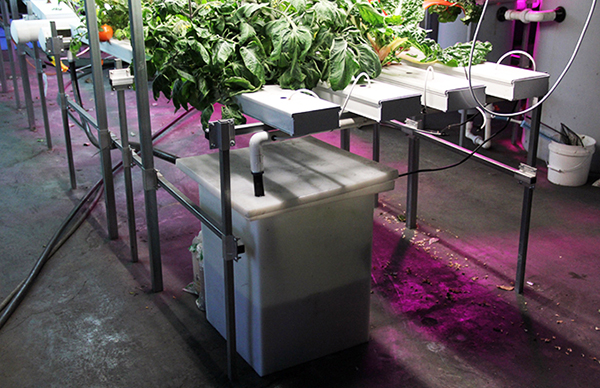 NFT Hydroponic Growing System Table Tank