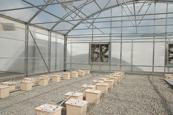 Dutch Bucket Hydroponic Growing System