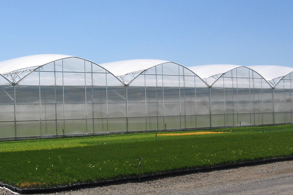 Commercial Quonset Greenhouse