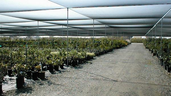 Flat Shade Systems Frame seasonal retail large production