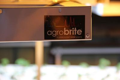 Agrobrite LED grow lights aquaponics