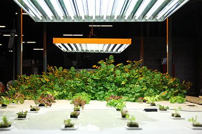 Agrobrite T5 fluorescent lighting custom bench