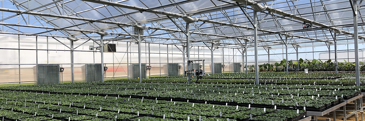Custom Commercial Research Wholesale Education Greenhouses