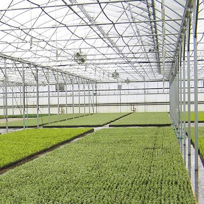 Commercial greenhouses horticulture floriculture hemp retail garden center nursery crops