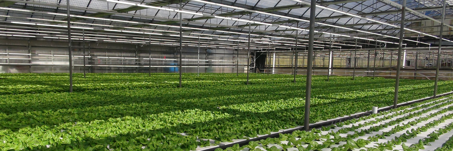Greenhouse Growing Systems NFT Hydroponic Commercial