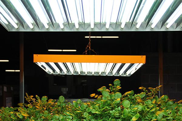 Grow lights flourescent Agrobrite