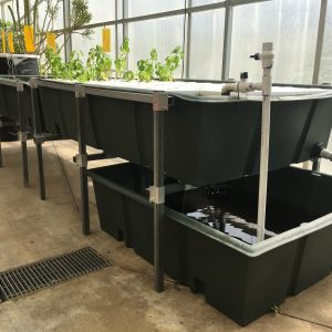 Affordable Aquaponic Growing Supplies