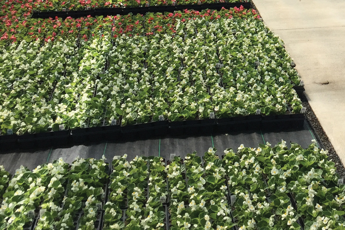 Hydronic Ground Heat Controlled Growing Environment
